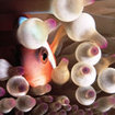 Anemonefish in a bulb-tentacle anemone