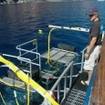 Great white cage diving at Guadalupe with MV Islander