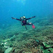 Explore  the hard coral fringing reefs of Nusa Lembongan