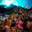 Bligh Water's vibrant coral reefs are ful of life and colour