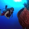 Belize scuba diving at Ambergris Caye