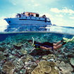Snorkelling on the Great Barrier Reef from a Cairns-based liveaboard