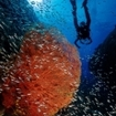 Liveaboard dive tours in southern Thailand