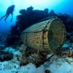 Traditional fish traps can still be found by divers