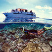 Snorkelling on a cruise with the Undersea Explorer
