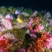 The shallows of Hin Muang are covered in anemones