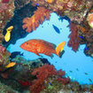 Colourful marine life of Hurghada, Egypt