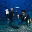 Diving with black trevally at Beqa Lagoon Resort