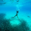 Free diving with reef fish