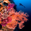 Explore the marine life in Raja Ampat