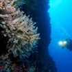 Scuba diving in southern Maldives
