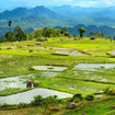 The green fields of rice terraces in Tana Toraja, south Sulawesi, Indonesia