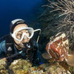 Encounter marine life during on the PADI Discover Scuba Diving program