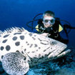 Meet friendly groupers on your day trips from Khao Lak