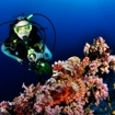 A scuba diver spots a scorpionfish in the Maldives
