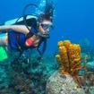 Diver with yellow tube sponges, Ambergris Caye