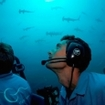 Schooling hammerhead sharks overhead in the Deep Sea Submersible