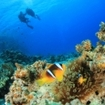 Scuba diving in Koh Tao is for beginners too