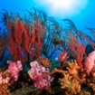 Sea fans and soft corals at Koh Samui, Thailand