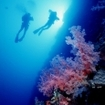 Scuba diving at Daedalus Reef, Red Sea