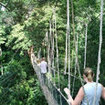 Cross over a hanging bridge at Danum Valley Rainforest, Sabah