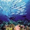 Diving on spectacular reefs is the norm here