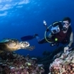 A scuba diver photographs a turtle