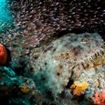 Diving in Raja Ampat with wobbegongs and glassfish