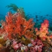 A riot of colour on the reefs of Sumbawa