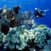 Diving on Roma's pristine coral reefs