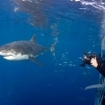 Take shark photos from the safety of the cage