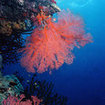 Diving in the Coral Sea