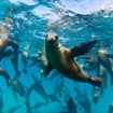 Sea lions in the Gulf of California, Mexico