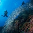 Scuba diving in the Surin Islands
