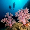 Phuket's spectacular soft coral dive sites
