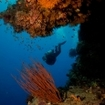 Scuba diving at Little Brother in the Red Sea