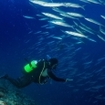 Scuba diving with barracuda in Malaysia