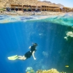 Snorkelling in Egypt's Red Sea