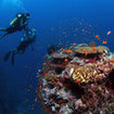 Liveaboard diving cruises in the Maldive Islands