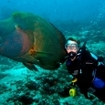 A diver gets close to a Napoleon wrasse in the Maldives