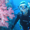 Scuba diving on the Rainbow Reef
