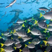 The evolutionary melting pot of marine life that is Galapagos
