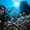 The healthy marine life of Cocos Island, Costa Rica
