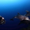 Scuba diving with dolphins in Mexico