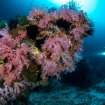 Incredible coral diversity in Romblon