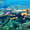 Tourist activities in Sharm El Sheikh -  snorkelling at Tiran Island