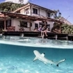 A blacktip reef shark investigates Misool Eco Resort's dive centre, Raja Ampat