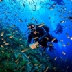 Dive in Koh Samui, surrounded by an aquarium of tropical fish