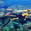 Snorkelling off the Sinai Peninsula