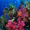 Fiji, soft coral capital of the world